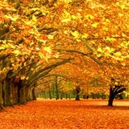 Herfst (27 oktober 2013)